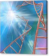 Dna Helices Canvas Print
