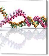 Dna Molecule Unwinding Canvas Print