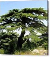 Do-00511 Cedar Forest Canvas Print