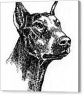Doberman-pincher-portrait Canvas Print