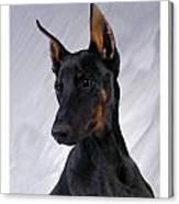 Doberman Pinscher 465 Canvas Print