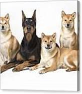 Doberman Pinscher And Friends Canvas Print