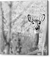 Doe A Deer. Canvas Print