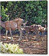 Doe And Twin Fawns Canvas Print
