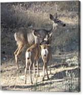 Doe And Twins Canvas Print