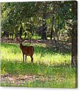 Doe In The Woods Canvas Print