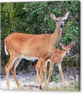 Doe With Fawn I Canvas Print