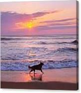 Dog At Play Canvas Print