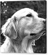 Dog Black And White Portrait Canvas Print