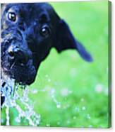 Dog Drinking From A Water Hose Canvas Print