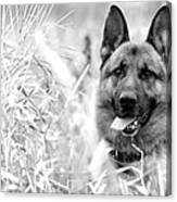 Dog In Field Canvas Print