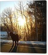 Dog In Morning Sun Canvas Print