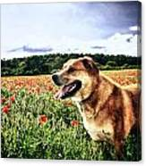 Dog In The Poppy Field Canvas Print