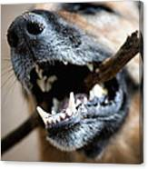 Dog Nose And Teeth Canvas Print