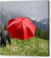 Dog On The Top Of A Mountain Canvas Print