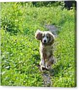 Dog Running In The Green Field Canvas Print