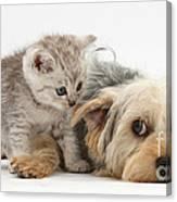 Dog Surrendering To Kitten Canvas Print