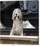 Dog Under A Train Wagon Canvas Print