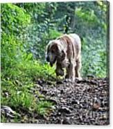 Dog Walking Canvas Print