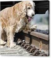 Dog Walking Over Railroad Tracks Canvas Print