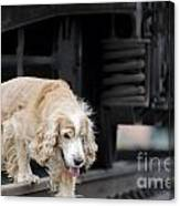 Dog Walking Under A Train Wagon Canvas Print