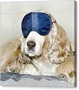 Dog With A Sleep Mask Canvas Print