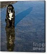 Dog With Reflections And Shadow Canvas Print