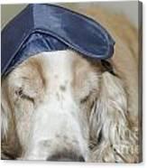 Dog With Sleep Mask Canvas Print