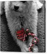 Dog With Tug Toy Soft Focus Canvas Print
