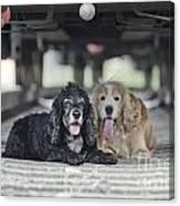 Dogs Lying Under A Train Wagon Canvas Print