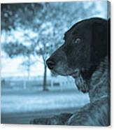 Dog's Point Of View Canvas Print