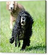 Dogs Running On The Green Field Canvas Print
