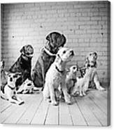 Dogs Watching At A Spot Canvas Print