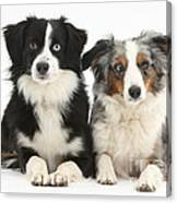 Dogs With Different-colored Eyes Canvas Print