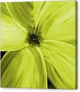 Dogwood Bloom Yellow Canvas Print