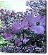 Dogwood  Canvas Print