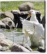 Doin The Duck Splash Canvas Print