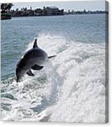 Dolphin Playing Canvas Print