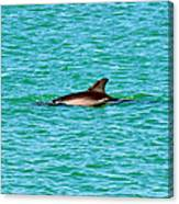 Dolphin Swimming Canvas Print