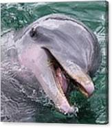 Dolphin With His Fish Canvas Print