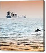 Dolphing Playing In The Sunset Canvas Print