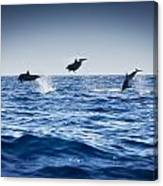 Dolphins Playing In The Ocean Canvas Print
