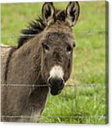 Donkey - The Beast Of Burden Canvas Print