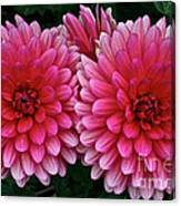 Double Dahlia Canvas Print