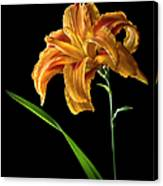 Double Day Lily Canvas Print