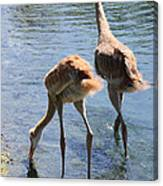 Sandhills Double Dipping Canvas Print
