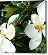 Double Magnolia Canvas Print