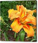 Double Old Fashion Day Lily Canvas Print