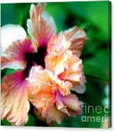 Double Peach Hibiscus Five Canvas Print