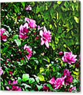 Double Rose Of Sharon Canvas Print